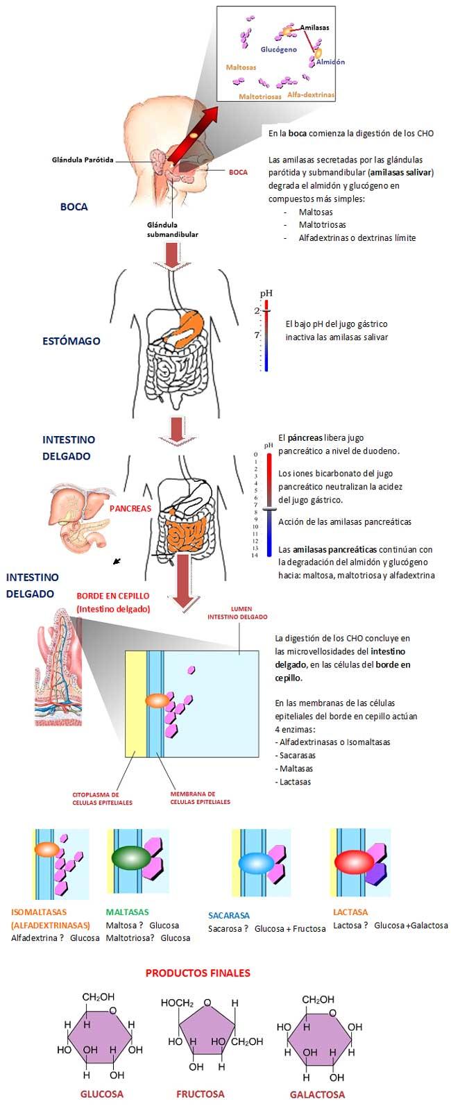 propionato de testosterona mas estanozolol