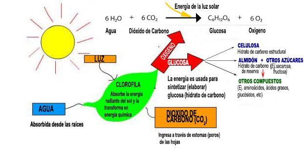 Que son los hidratos de carbono y como se clasifican