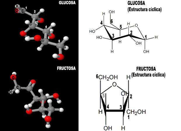 Hidratos De Carbono Carbohidratos Edualimentaria Com